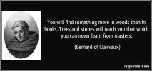 Saint Bernard, qoutation (1994). Photographer: archiv