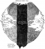 -lost_arctic_continent_sunken_large.png
