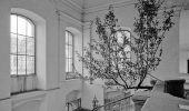 -charlie_citron_.blue_tree._symposium_fungus_-_pruzkum_mista_1995_foto_daniel_sperl.jpg